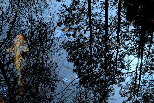 Photos: 森を泳ぐ