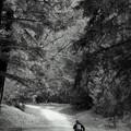 Photos: 森の匂い