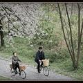 桜スマイル