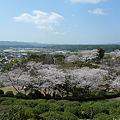 日輪寺の桜(4)