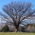 この木何の木?