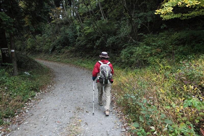 IMG_5277金時山登山・仙石原のすすき