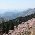 Photos: IMG_6066妙義山_艶桜_さくらの里