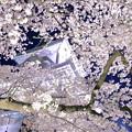 金沢城(菱櫓)と満開の桜(2)