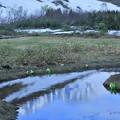 八方尾根 湿原の水芭蕉と山並み 映り込み