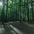 Photos: 早朝の美人林?  森林浴の森百選