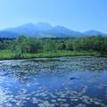 Photos: 妙高山といもり池 カモ