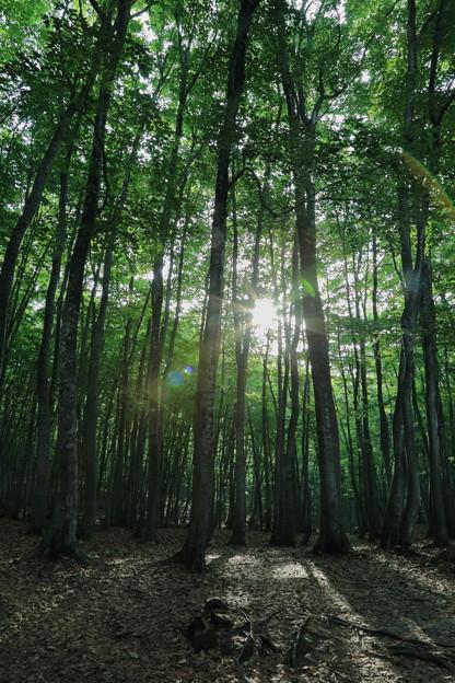美人林 森林浴の森 百選(2)
