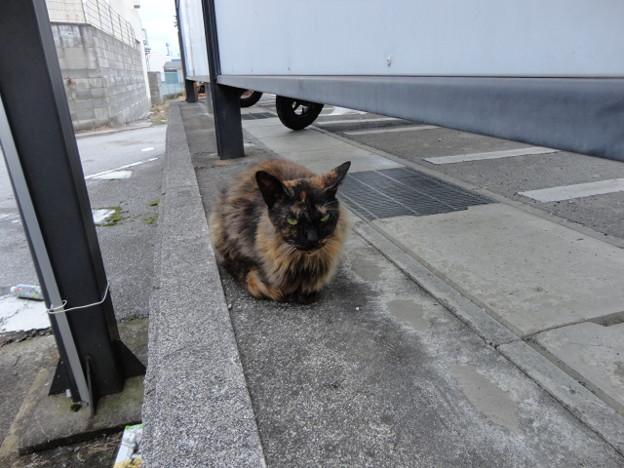 豊郷駅で遭遇した猫