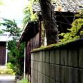 Photos: 出石