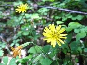 10.11 黄色い花s