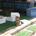 魚屋に猫。