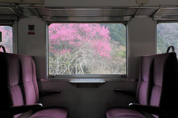 Photos: 20120320安野花の駅公園01