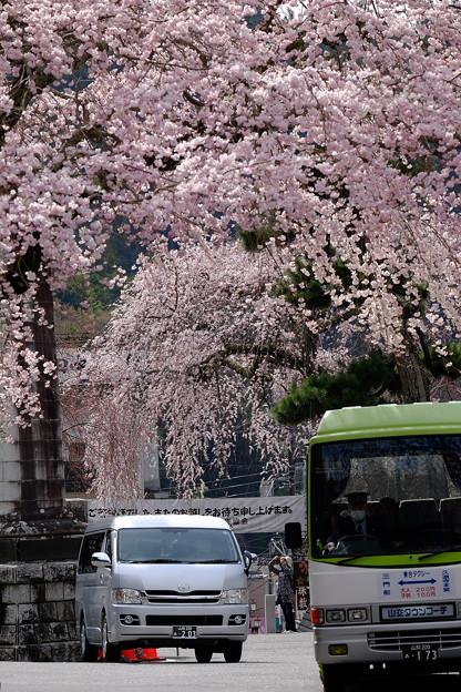 桜`15(久遠寺編)-22
