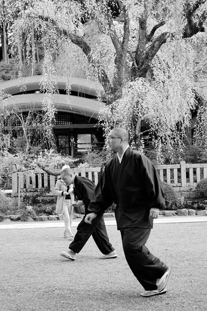 Photos: 桜`15(久遠寺編)-27