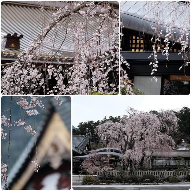 桜`15(久遠寺編)-31