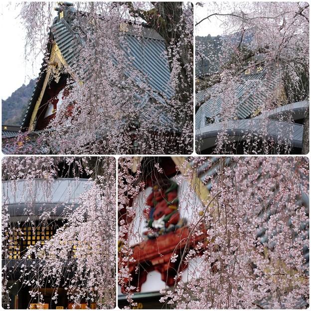 桜`15(久遠寺編)-33