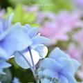 Photos: 雨待ち通りの花