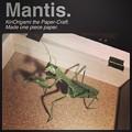 Photos: mantis