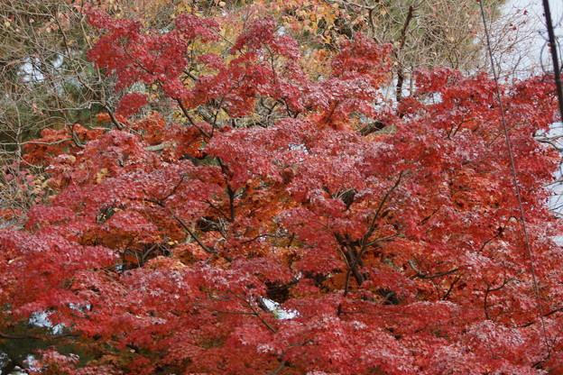 Photos: 秋の奈良市内0002