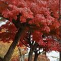 Photos: 秋の奈良市内0003