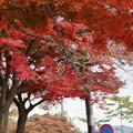 Photos: 秋の奈良市内0005