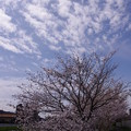Photos: 花見2015