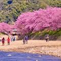 河川敷で河津桜を楽しむひと時。。2月28日