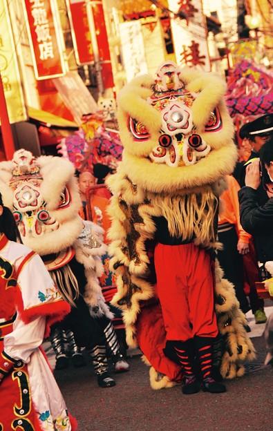 祝賀パレード 春節 お祝いの中国獅子舞。。2月28日