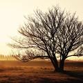 旧米海軍上瀬谷通信施設跡地の木と朝焼け。。3月31日