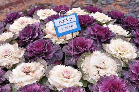 奈良県フラワーセンター・8