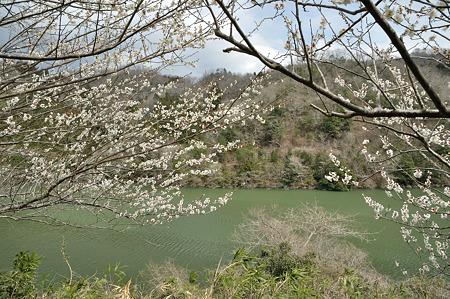 月ヶ瀬で梅撮影2012-4