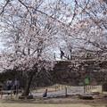 Photos: takedajoSakura_DSC02668
