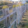 Photos: 枕木柵と鉄路