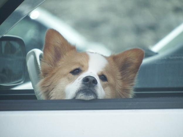 車内で主を待つ忠犬 vol.3