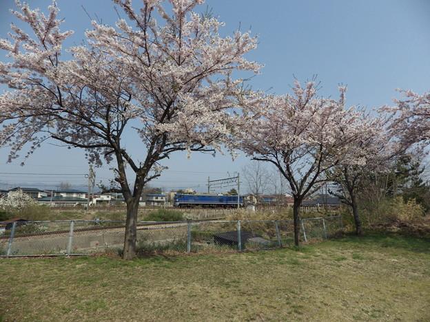 蔵出し~桜と貨物列車 vol.2