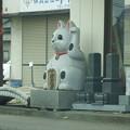 Photos: 石材店の巨大招き猫