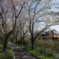 Photos: 1年前の4月29日~桜と快速リゾートしらかみ くまげら編成