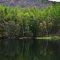 翠を迎える池