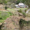 Photos: しだれ桜と小野豆集落