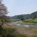 志文川と桜