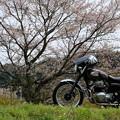 腰痛地蔵の桜とW650