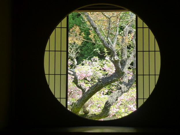 雲龍院  悟りの窓