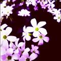 Photos: かわいい貴方に花束を