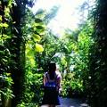 Photos: 私の庭