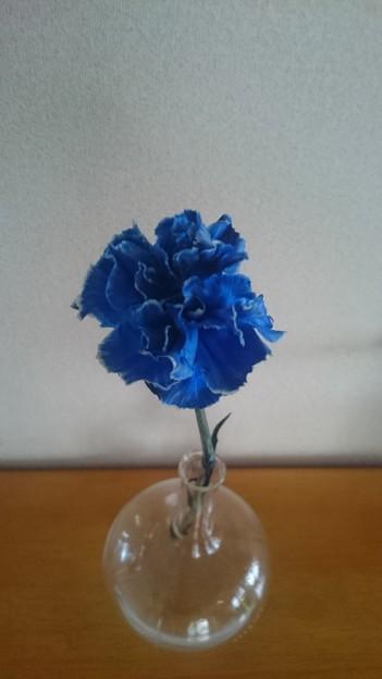 青いカーネーションの花言葉