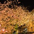 日田市中野川の八重桜♪?