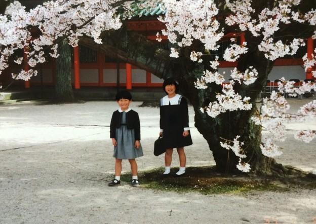 小学生 桜