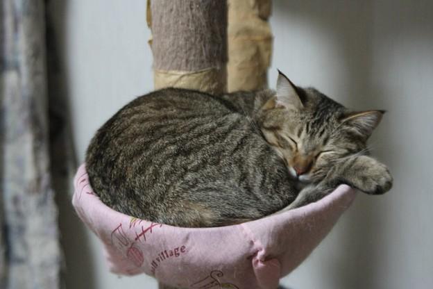 Photos: シオジロウ寝る