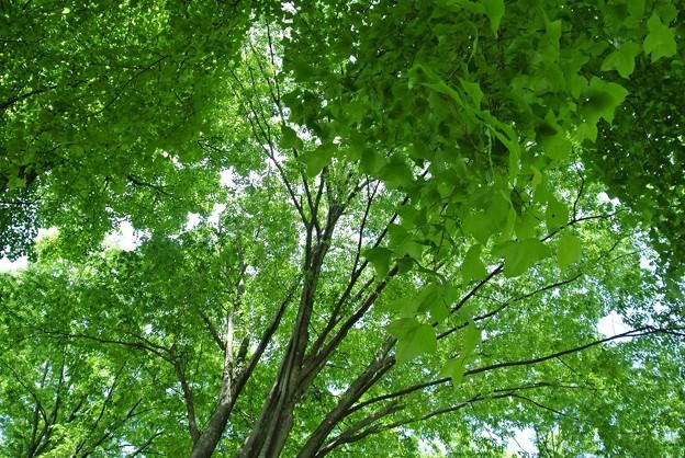 森の木陰で・・